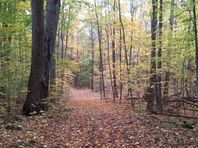 Beautiful hardwood forest
